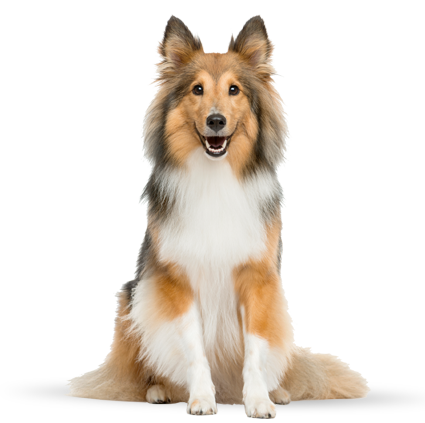 accredited dog cat daycare boarding dog training from freepnglogos.com